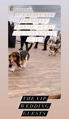 Los perros de Ree se estrellaron en la recepción nupcial de Alex y Mauricio, ¡y las fotos no tienen precio!