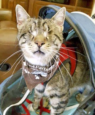 Šis saldais kaķis pārvarēja nepārspējamas izredzes kļūt par terapijas dzīvnieku