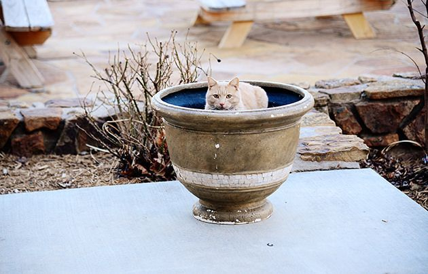 Gatito en la jardinera