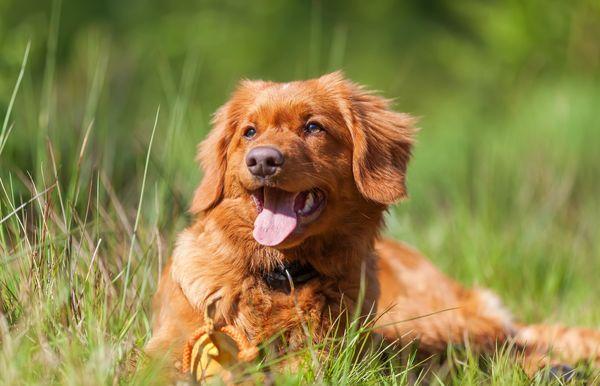 Kā ārstēt ērces kodumu savam sunim, uzskata vetārsts
