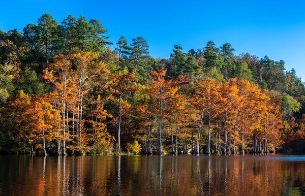 Este mapa de follaje de otoño predice exactamente cuándo cambiarán las hojas en los EE. UU.